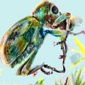 2018 Art of Science First Place Coniatus splendidulus